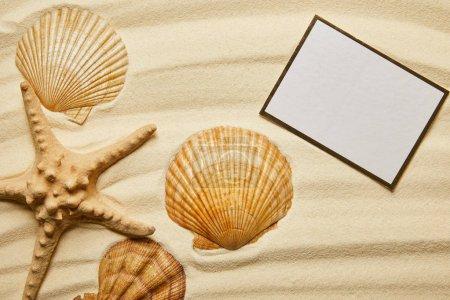Foto de Cartel en blanco cerca de conchas marinas anaranjadas y estrellas de mar en la playa de arena en verano - Imagen libre de derechos