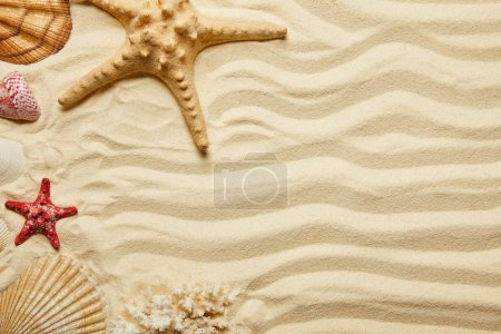 Photo for Top view of red and yellow starfish, seashells and coral on sandy beach in summertime - Royalty Free Image