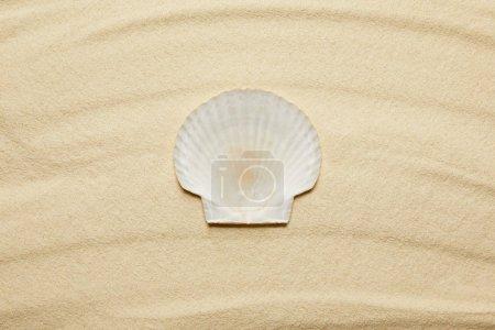 Photo pour Vue de dessus de coquillage sur la plage de sable en été - image libre de droit