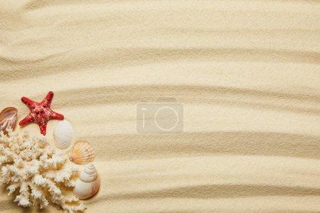 Photo pour Vue de dessus des étoiles de mer, des coquillages et du corail blanc sur la plage de sable en été - image libre de droit