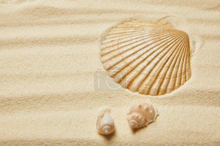 Photo pour Foyer sélectif des coquillages sur la plage de sable fin en été - image libre de droit