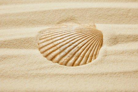 Photo pour Coquillage sur la plage avec sable doré en été - image libre de droit