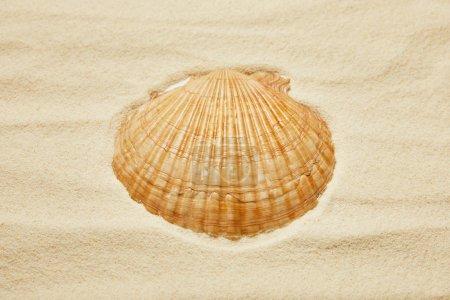 Orange Muschel am Strand mit goldenem Sand im Sommer