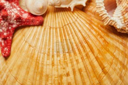 Foto de Foco selectivo de conchas de naranja cerca de estrellas de mar rojas en verano - Imagen libre de derechos
