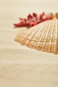 """Постер, картина, фотообои """"селективный фокус оранжевый и текстурированной раковины на пляже в летнее время"""""""