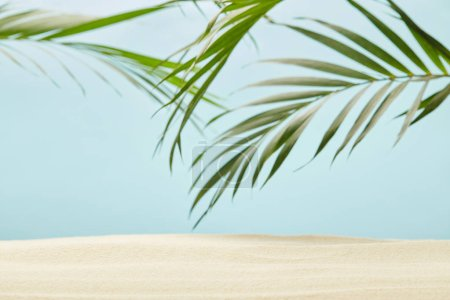 Photo for Green palm leaves near golden sandy beach on blue - Royalty Free Image
