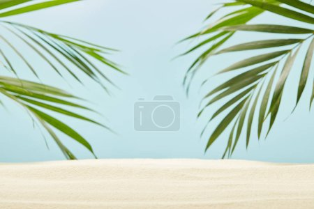 Photo for Green palm leaves near golden sand on blue - Royalty Free Image