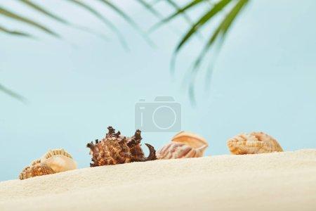 Photo pour Focus sélectif des coquillages sur la plage de sable doré près des feuilles de palmier vert sur le bleu - image libre de droit