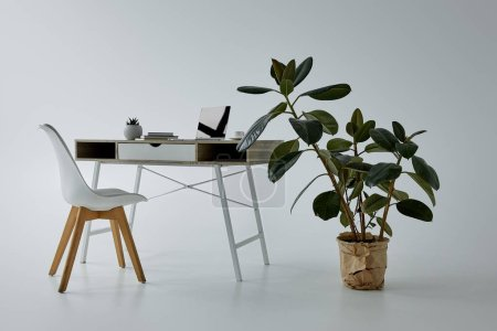 Photo for Green ficus in flowerpot, white chair and table with laptop on grey - Royalty Free Image