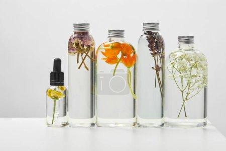 Photo pour Produits de beauté biologiques dans des bouteilles transparentes avec des herbes et des fleurs sauvages disposées en ligne sur la table blanche d'isolement sur le gris - image libre de droit