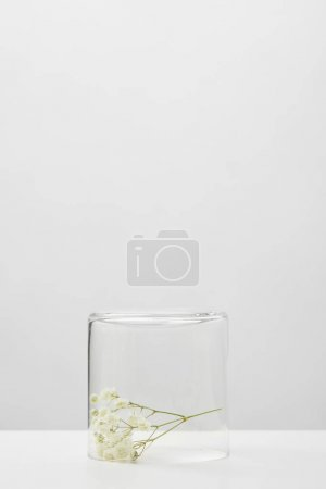 Photo pour White branch of wildflowers in transparent glass isolated on grey - image libre de droit