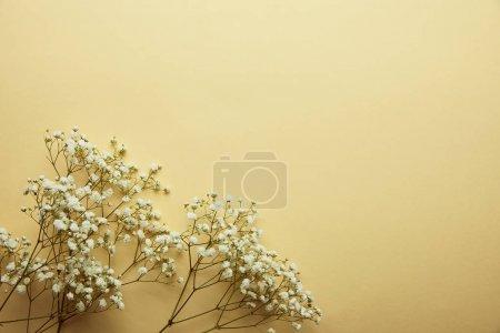 Foto de Vista superior de flores silvestres blancas secas sobre fondo blanco con espacio de copia - Imagen libre de derechos