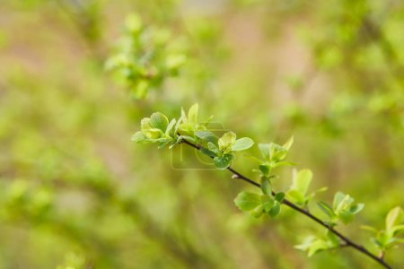 Photo for Close up of green flowers on tree branch on blurred background with copy space - Royalty Free Image