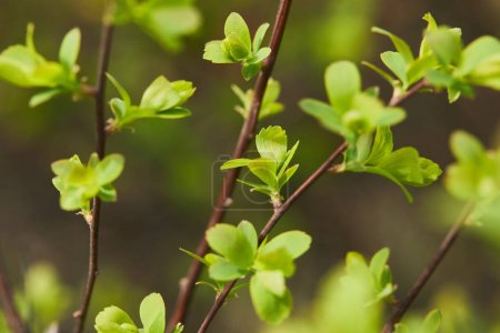 close up of green blooming flowers on tree branches in spring