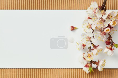 Photo for Top view of tree branch with blooming spring flowers on white blank card - Royalty Free Image