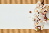 "Постер, картина, фотообои ""top view of tree branch with blooming spring flowers on white blank card"""
