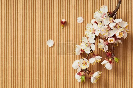 Photo for Top view of tree branch with blooming spring flowers on textured background - Royalty Free Image