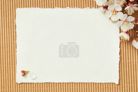 Photo for Top view of tree branch with blooming spring flowers on white blank stripped card on textured background - Royalty Free Image