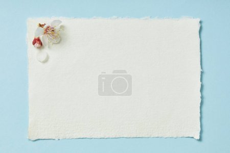 Photo for Top view of blooming spring flowers on white blank stripped card on blue background - Royalty Free Image