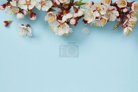 Photo for Top view of tree branch with blossoming flowers on blue background - Royalty Free Image