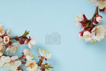 Photo for Close up of tree branches with blossoming spring flowers on blue background - Royalty Free Image