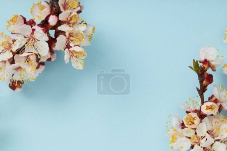 Photo for Close up of tree branches with blossoming white flowers on blue background - Royalty Free Image