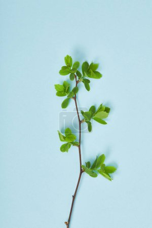 Foto de Vista superior de la rama del árbol con hojas verdes sobre fondo azul - Imagen libre de derechos