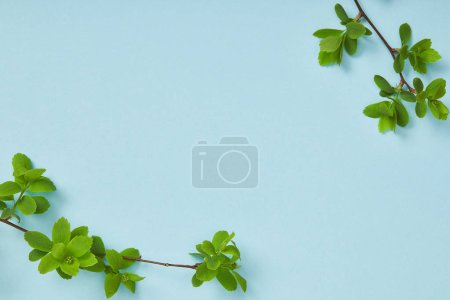 Photo pour Vue supérieure des branches d'arbre avec les feuilles vertes fleurissantes sur le fond bleu avec l'espace de copie - image libre de droit