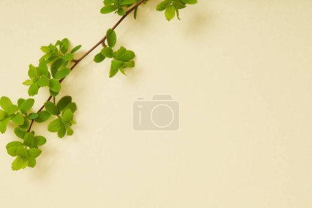 Photo for Top view of branch with blooming green leaves on yellow background - Royalty Free Image