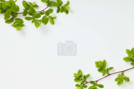 top view of branches with blooming green leaves in corners on white background