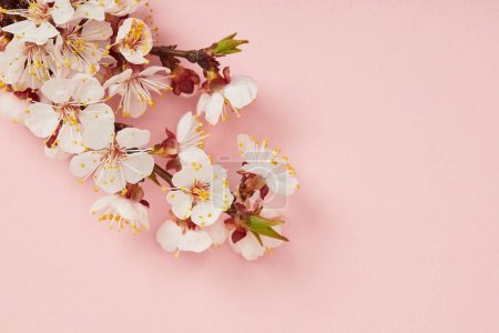 top view of tree branch with blooming spring flowers on pink background