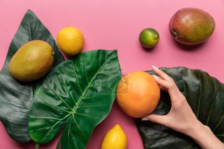 Photo for Cropped view of woman holding grapefruit near whole ripe tropical fruits with green leaves on pink background - Royalty Free Image