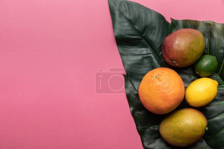 Photo for Top view of whole ripe tropical citrus fruits and mango on green leaves on pink background with copy space - Royalty Free Image