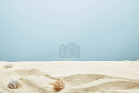 Photo for Scattered seashells on textured sand on blue background - Royalty Free Image