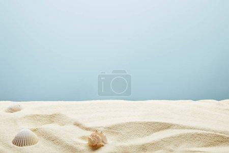 Foto de Conchas de mar dispersas sobre arena texturizada sobre fondo azul - Imagen libre de derechos