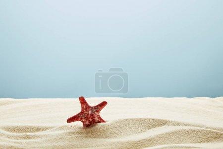 wellig strukturierter goldener Sand mit roten Seesternen auf blauem Hintergrund