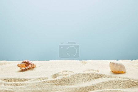 wavy textured golden sand with seashells on blue background