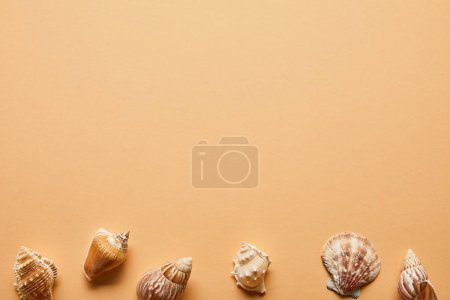 Photo for Top view of marine textured seashells on beige background - Royalty Free Image