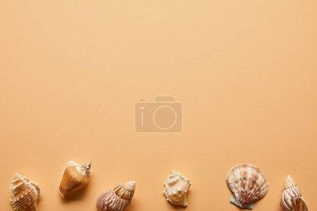 Photo pour Vue de dessus des coquillages marins texturés sur fond beige - image libre de droit