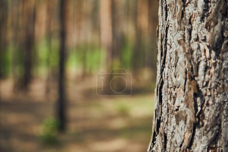 Photo pour Vue rapprochée de l'arbre texturé dans la forêt avec espace de copie - image libre de droit