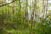 """Постер, картина, фотообои """"Green and leafy trees in forest thick"""""""