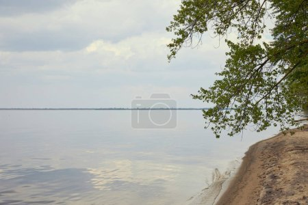Coast of river with green tree on sandy beach