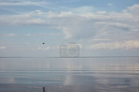 Photo for Bird flying near river on blue peaceful sky with white clouds - Royalty Free Image