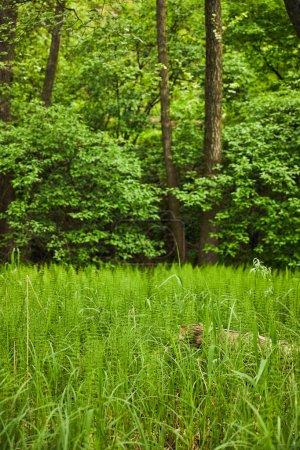 Photo pour Paysage coloré avec les arbres verts, l'herbe et les buissons - image libre de droit