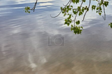Photo for Small branches with green leaves on trees near river - Royalty Free Image