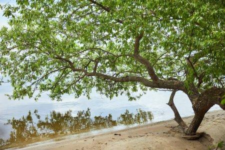 Zielone liście na gałęziach drzew w pobliżu rzeki i piasku wybrzeża
