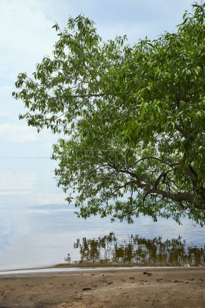 Foto de Rama de árbol con hojas verdes cerca del agua del río - Imagen libre de derechos