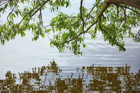 Photo for Green leaves on tree reflected in river water - Royalty Free Image