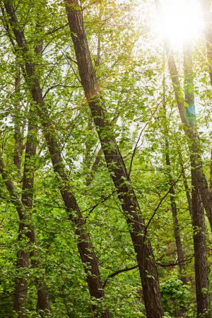 Bright light and green leaves in forest