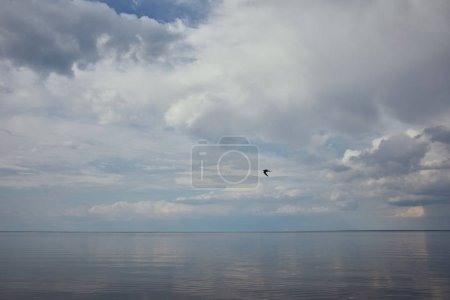 Photo for Blue sky with white clouds and flying bird reflected in river water - Royalty Free Image